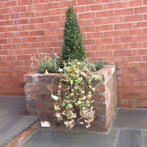 Brick raised bed with buxus topiary