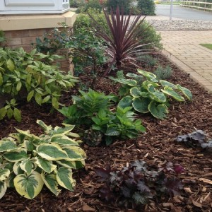 Low-maintenance planting scheme