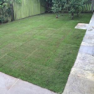 lawn turf York